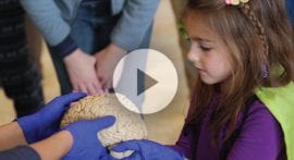 How does your brain form memories?