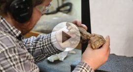 How do scientists find fossils?