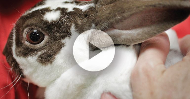 how to fix rabbit teeth