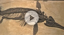 How did animals evolve from water to land?