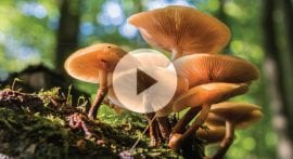 How do you identify edible mushrooms?