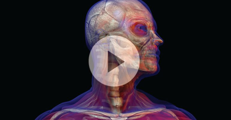 Could Scientists Build A Virtual Brain And Body For Research