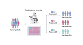 Redox imaging allows measurement of drug responses in lab-grown cancer samples