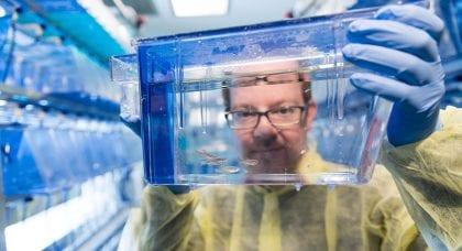 Model organisms: Peculiar creatures, big discoveries