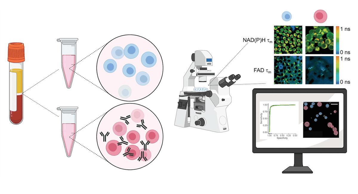 Novel t-cells