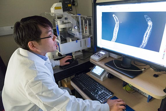 Jayhun Lee, a postdoctoral fellow in the Newmark Lab, looks at the gut of a juvenile schistosome.