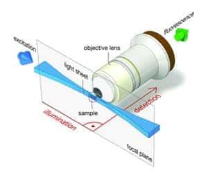 Amazing Light Sheet Microscopy Home Design Ideas