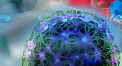 Immortal: An oral history of stem cell discovery