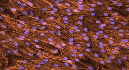 Stem Cells @ 20