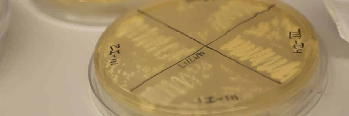 Yeast enables exploration of 'powerhouse of the cell'