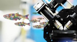 Imaging the zebrafish, one cell at a time